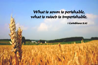 What is sown is perishable, what is raised is imperishable. 1 Corinthians 15.42 --Romans 15.42