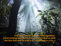 """God said, """"Let the earth put forth vegetation: plants yielding seed, and fruit trees of every kind on earth that bear fruit with the seed in it."""" And it was so. --Genesis 1.11"""